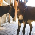 Laurie Hood Editorial Feature September/October 2014 Animal Issue - Donkeys at Alaqua Animal Refuge