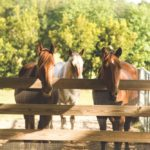 Laurie Hood Editorial Feature September/October 2014 Animal Issue - Horses at Alaqua Animal Refuge